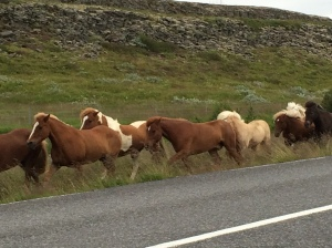 Horses running along the road