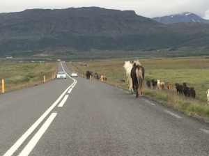 Unless you're the lead horse, the view never changes... unless you decide to hop onto the road and make your own way