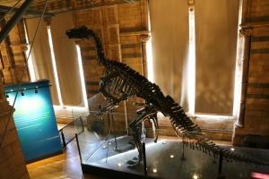 Iguanodon skeleton