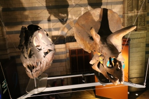 T-Rex and Triceratops skulls
