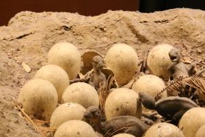 Orodromeus nest model