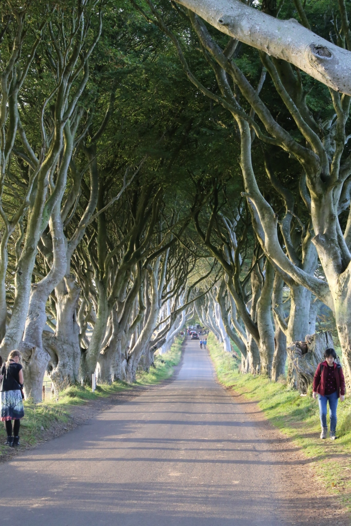 The Dark Hedges, the only grove of serpentine beech trees growing together in the world, was featured as the Kings Road at the beginning of season 2.