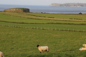 Sheep and gorgeous coastline on the northern coast