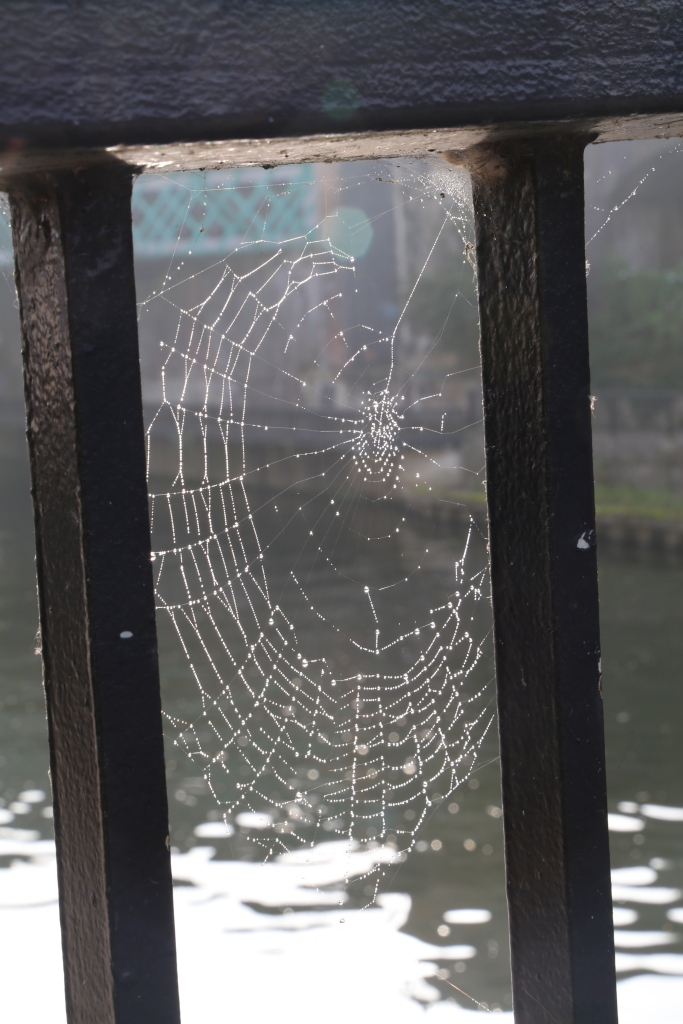 Spider web with the River Avon in the background