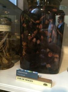 Jar of Moles