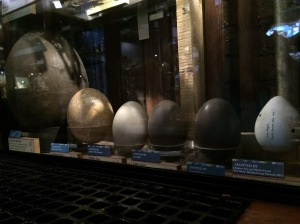 Various large bird eggs from Elephant Bird down to King Penguin.