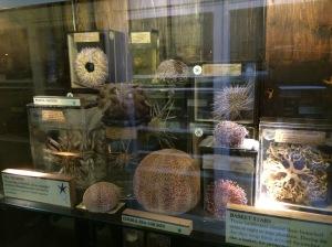 Various sea creatures