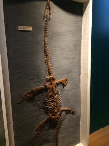 Plesiosaurus - this one reminded me of Han Solo in carbonite.