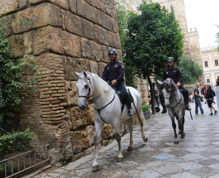 The tourist police in Valencia ride these beautiful horses.