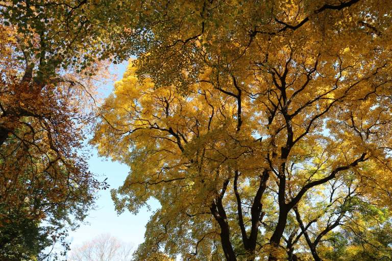 Fall goodness