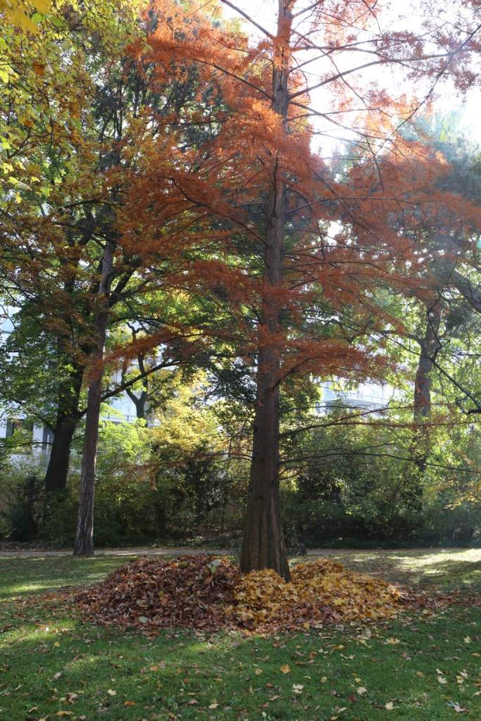 Even the leaves are raked in order - light to one side.