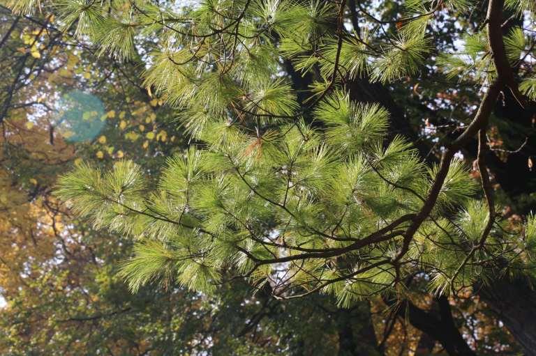 More lovely evergreens