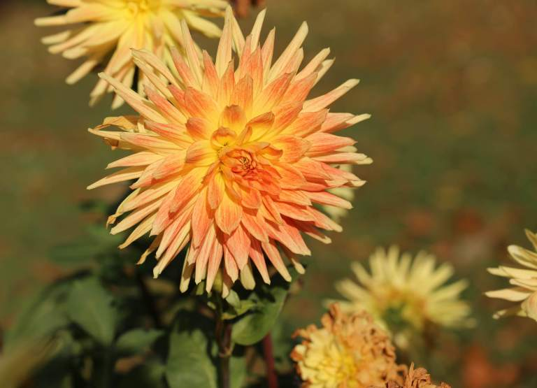 These dahlias were the most remarkable shades of orange and yellow