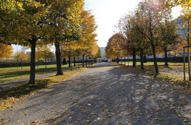 Gauntlet of trees just beyond the Upper Belvedere