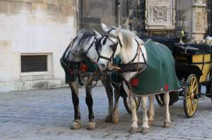 Carriage rides are available in many places in Vienna, especially in Stephansplatz