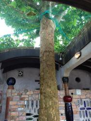 Hundertwasser15