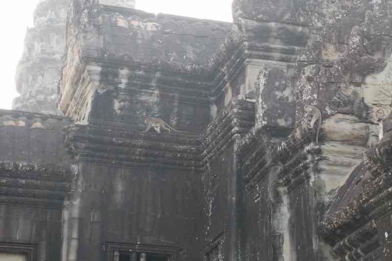 AngkorWatMonkeys6