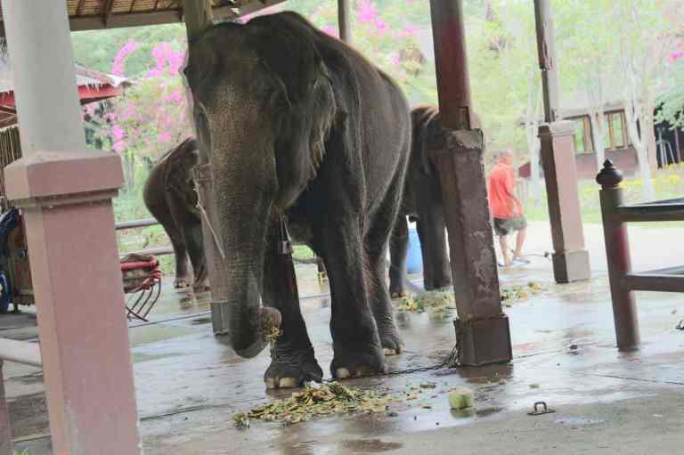 ElephantDemo1