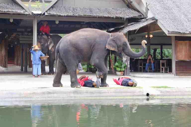 ElephantDemo10
