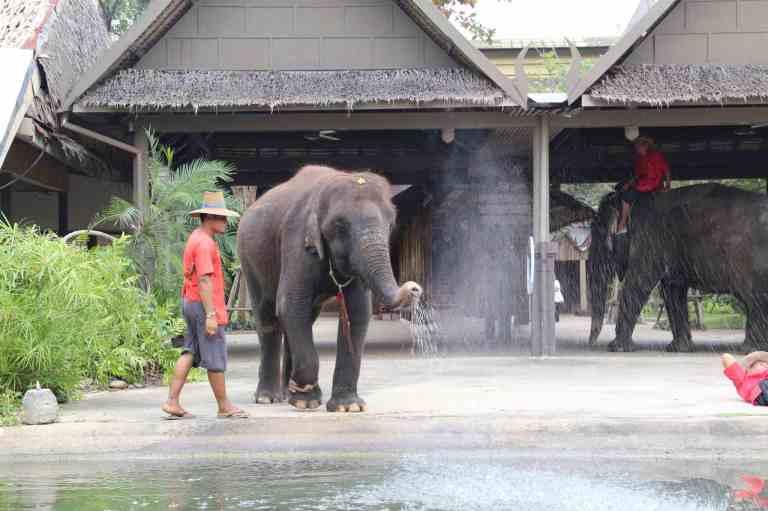 ElephantDemo11