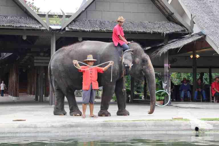 ElephantDemo12