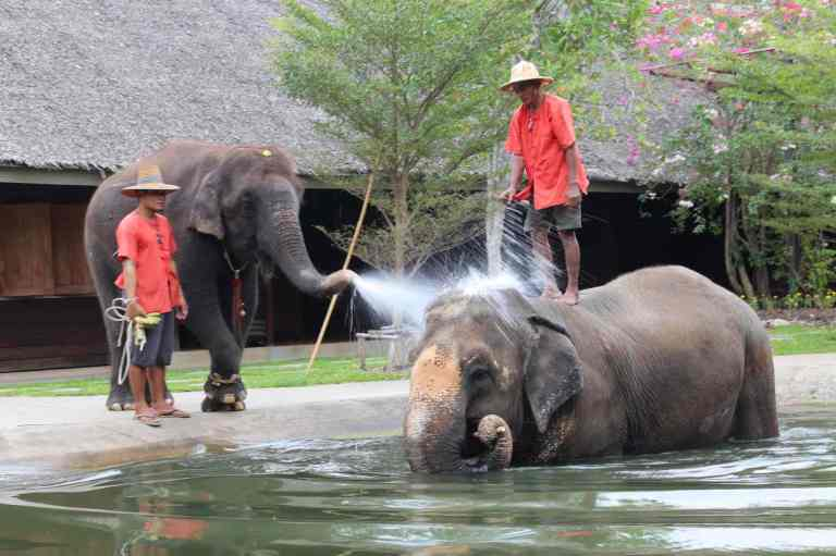 ElephantDemo13