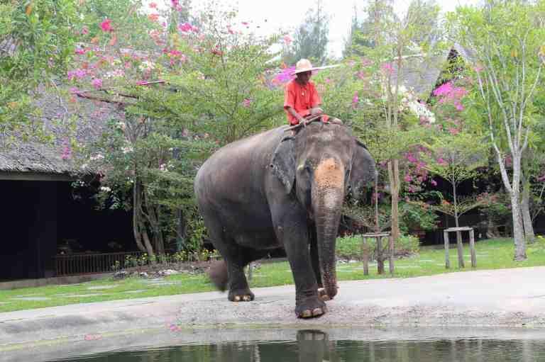 ElephantDemo14