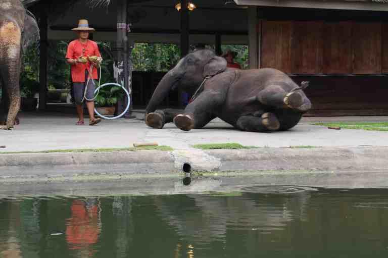 ElephantDemo15