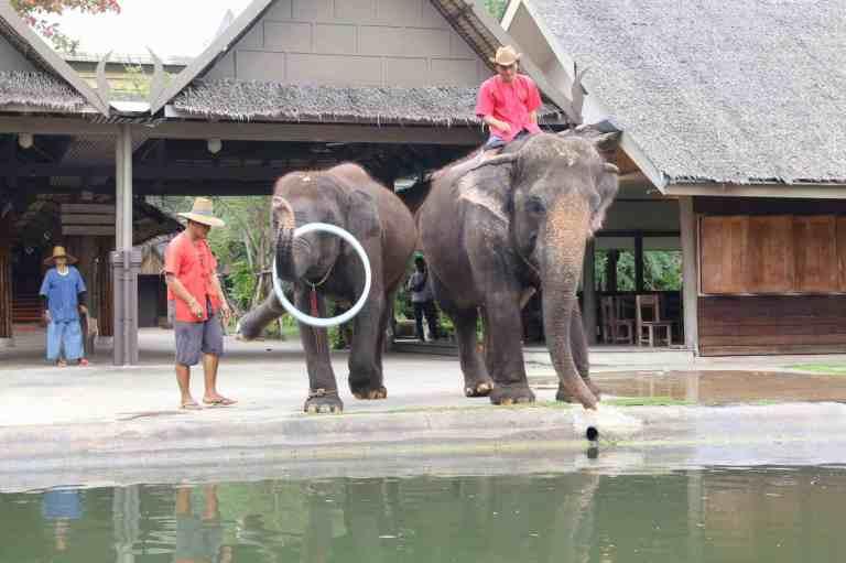 ElephantDemo16