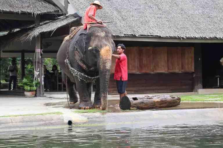 ElephantDemo17