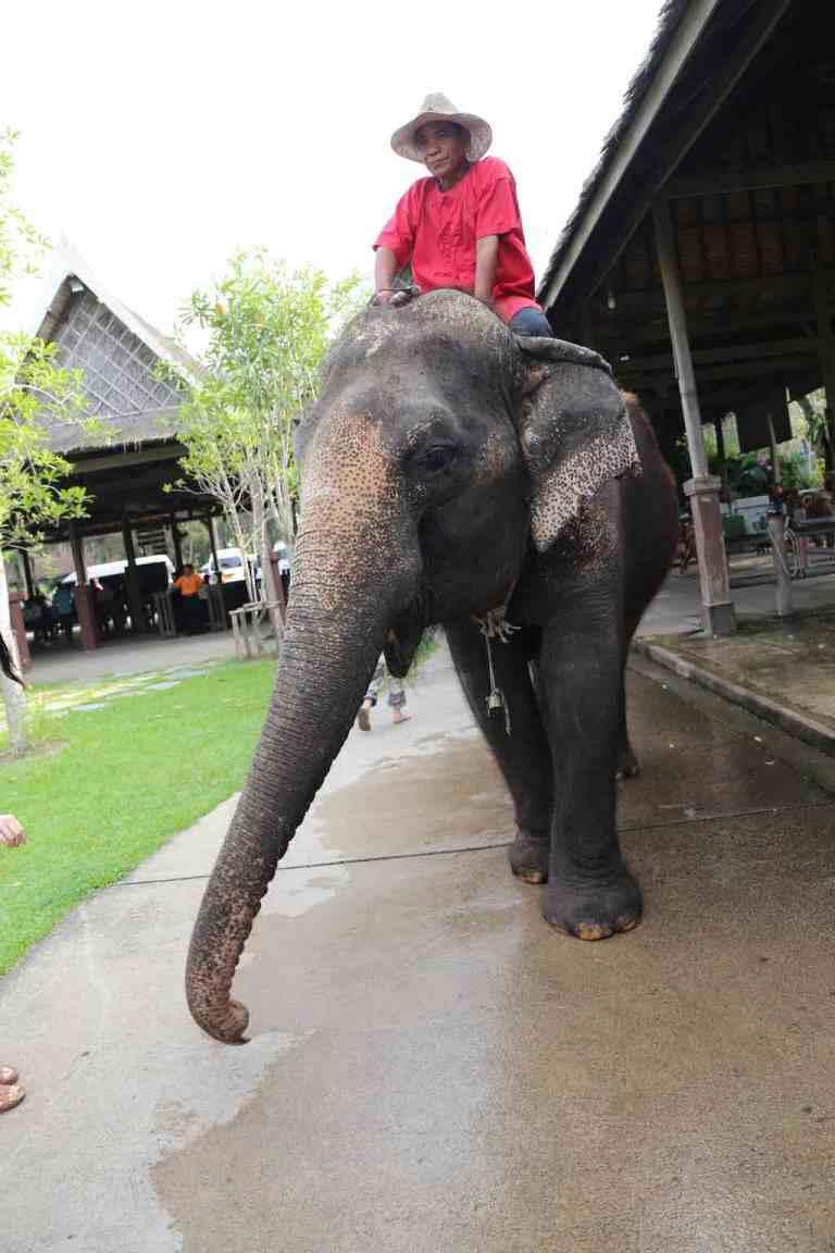 ElephantDemo18