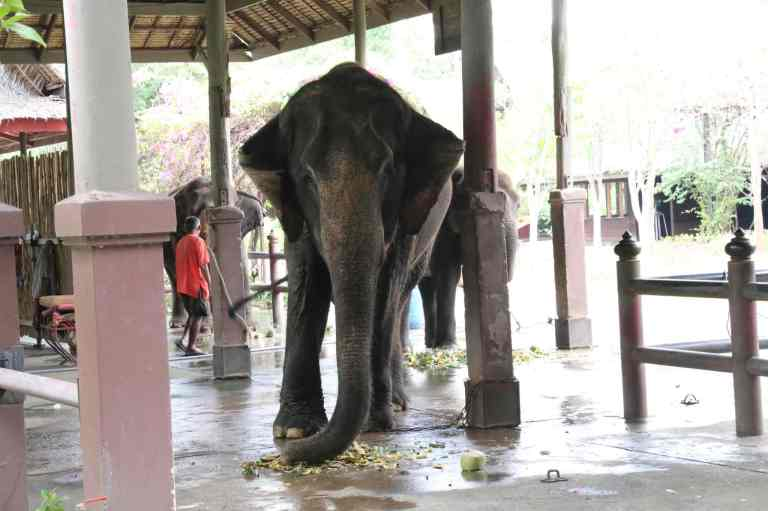 ElephantDemo2