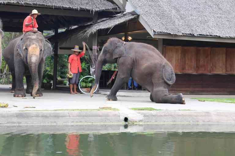 ElephantDemo3