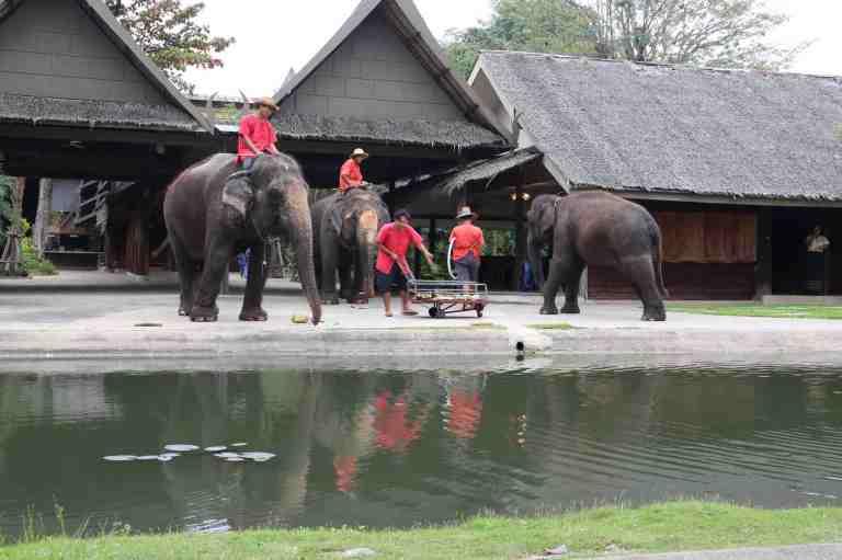 ElephantDemo4