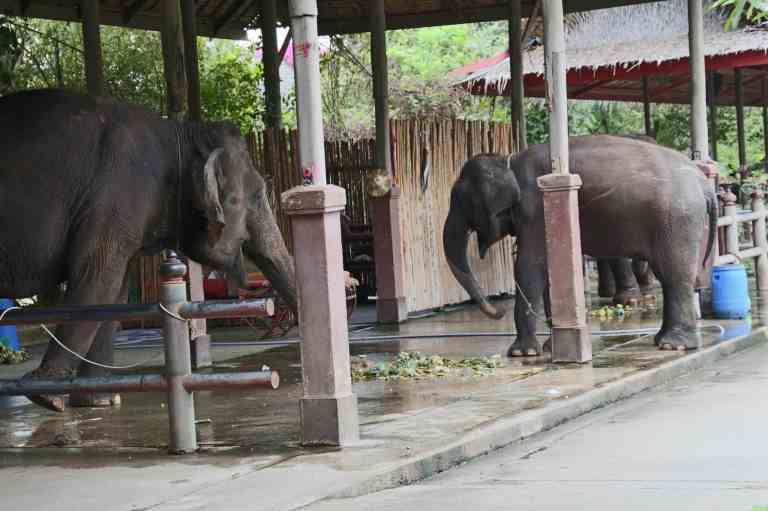 ElephantDemo5