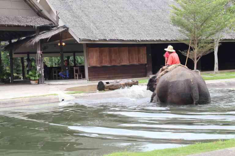 ElephantDemo6