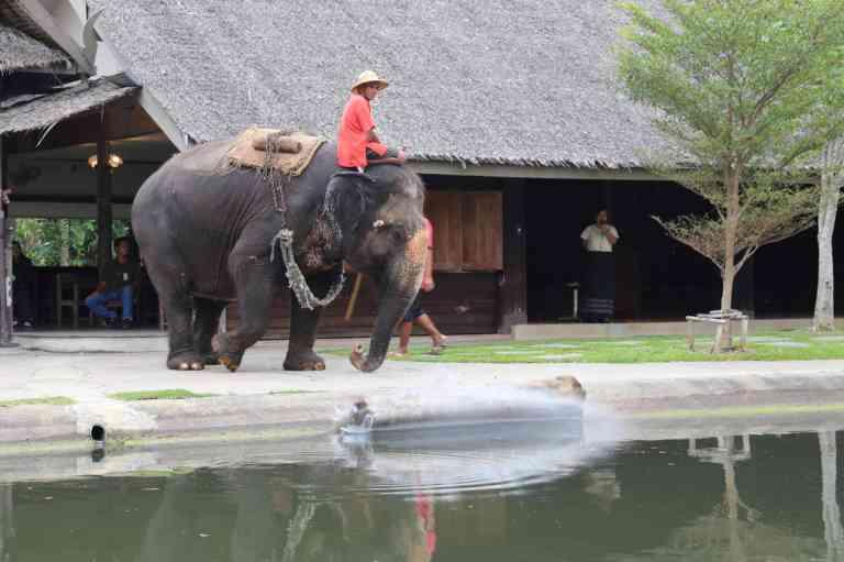 ElephantDemo7
