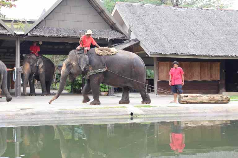 ElephantDemo8