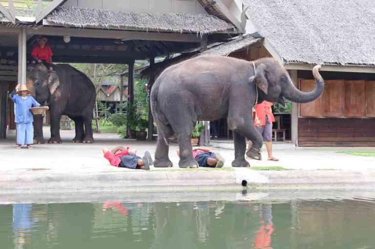 ElephantDemo9