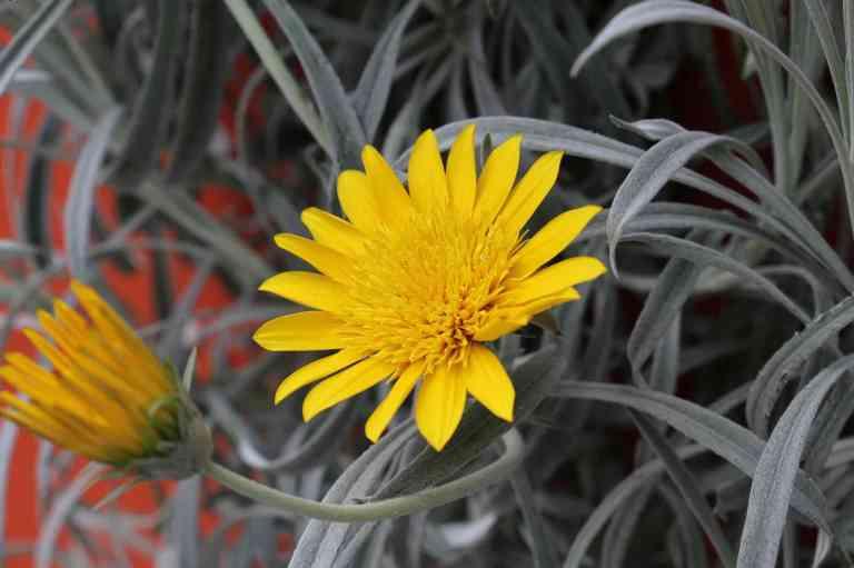 FlowerDome2