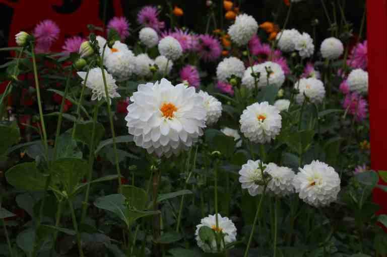 FlowerDome23