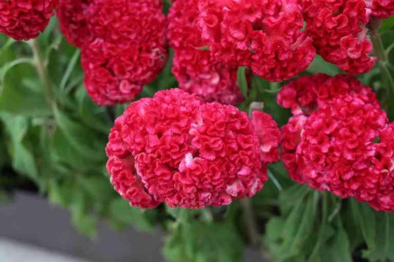 FlowerDome26