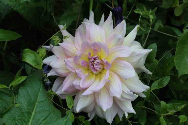 FlowerDome28
