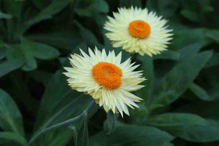 FlowerDome9