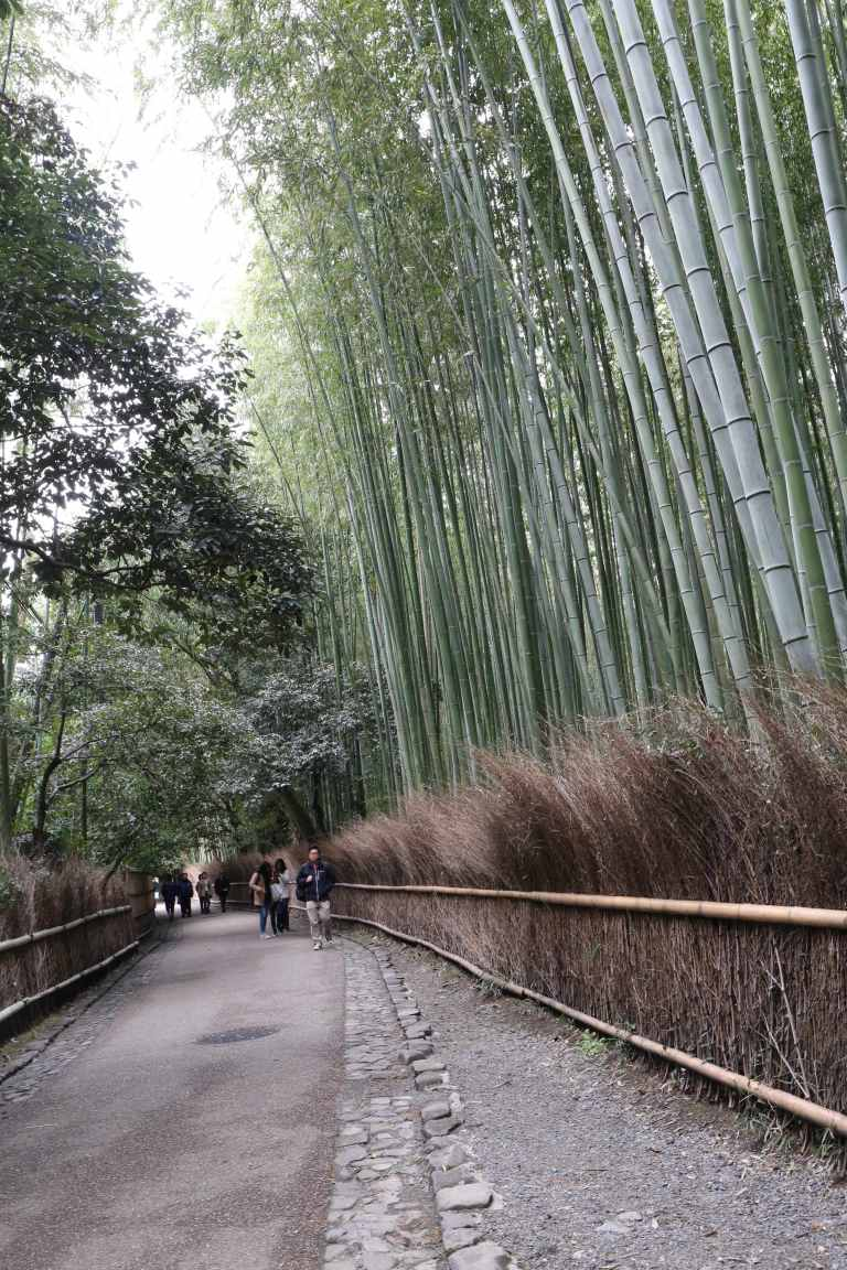 KyotoBamboo1