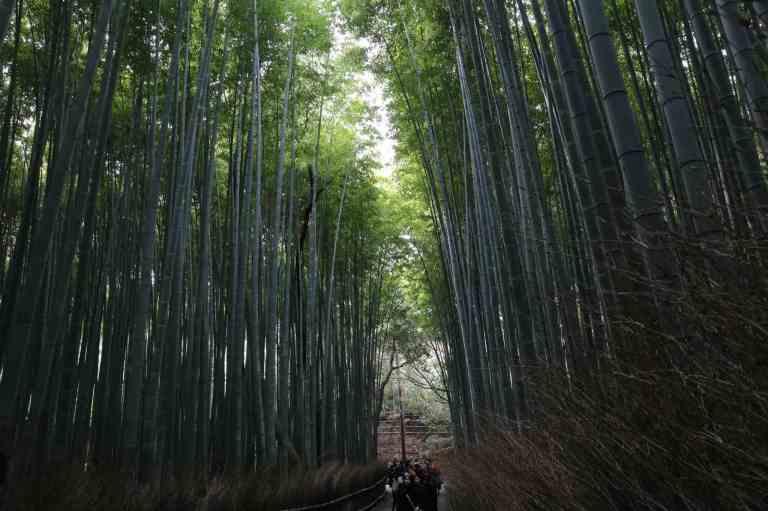 KyotoBamboo11