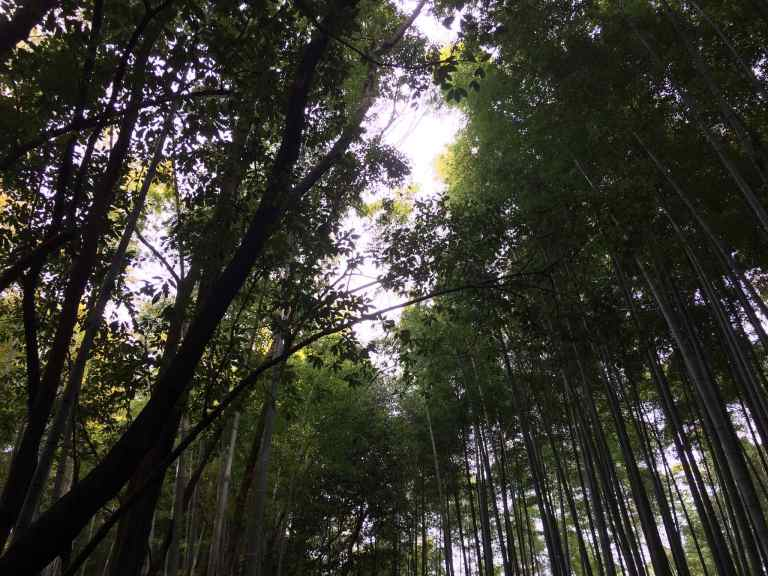 KyotoBamboo17