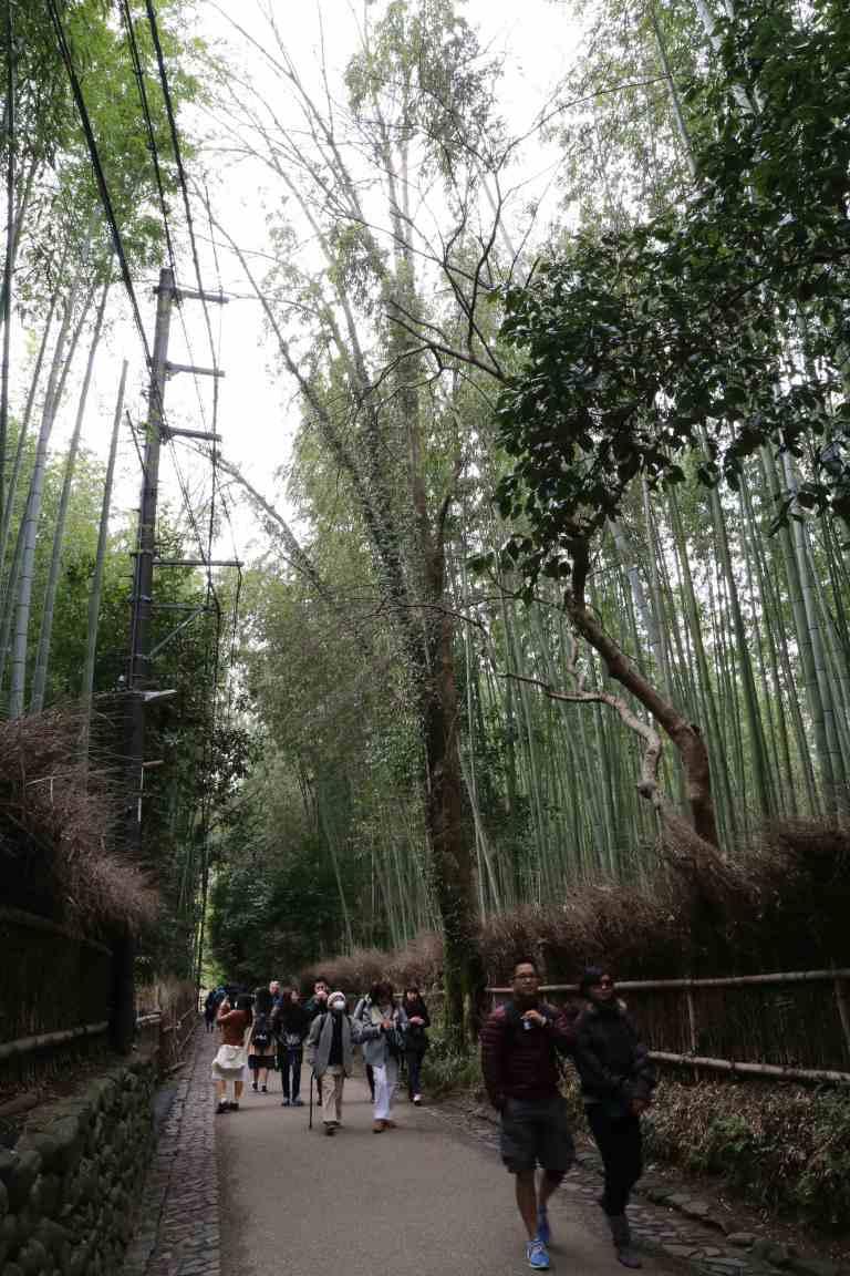 KyotoBamboo7
