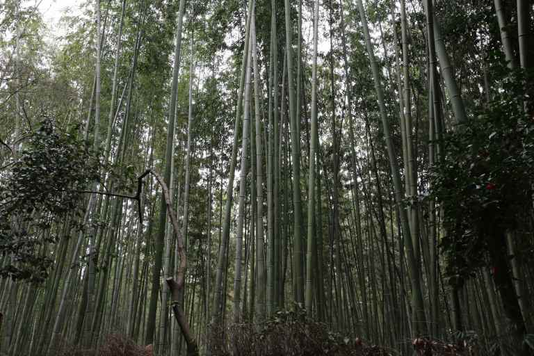 KyotoBamboo8