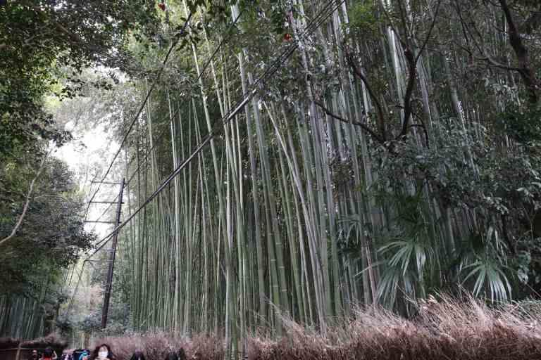 KyotoBamboo9